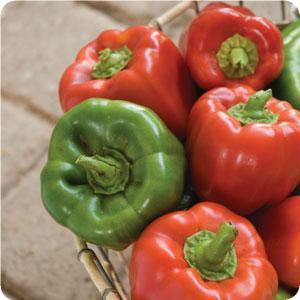 Big Bertha bell pepper produces a green to red fruit. It matures in 70 to 73 days.