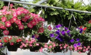 An assortment of hanging flower baskets.