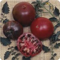Flattened, dark red-purple fruit with delicate skin, green shoulders Tomato - Indeterminate - 8-12oz fruit - 69-90 days to maturity - Very Juicy - Blossoms & Fruit develop progressively - Must be staked or caged (Photo courtesy of www.Ballseed.com)